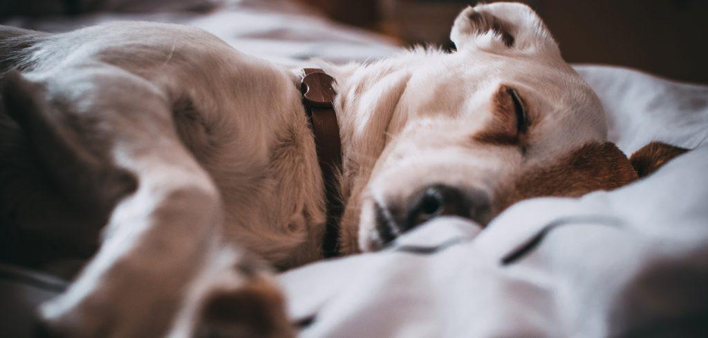 Chew proof dog bed UK
