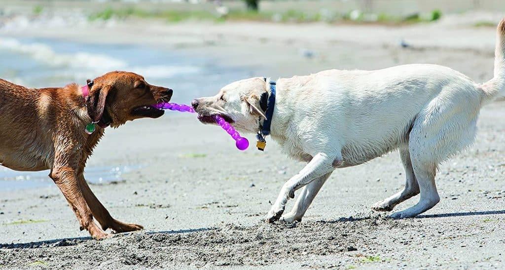 Indestructible dog toys UK