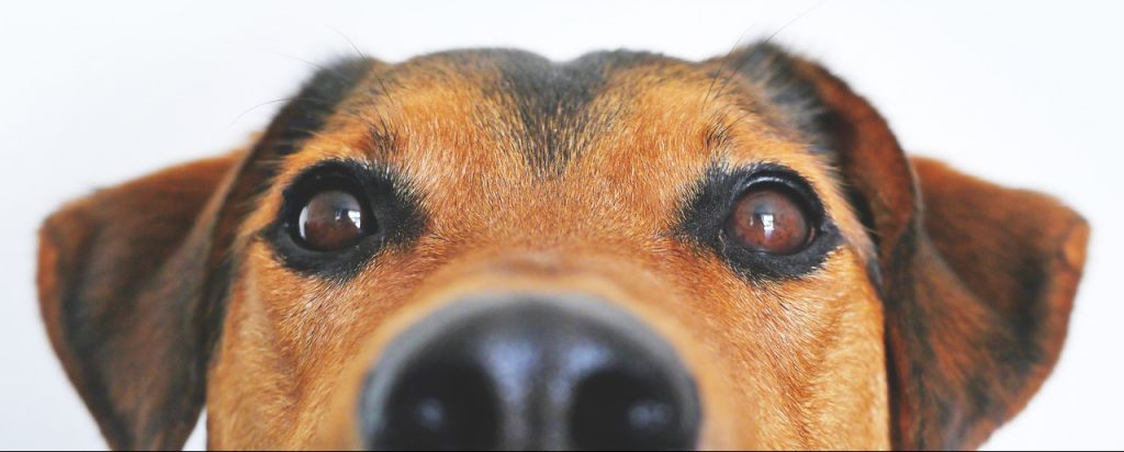 Best Dog Wormer UK