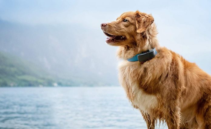 best dog trackers uk