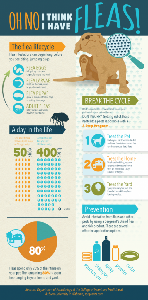 dogs fleas infographic