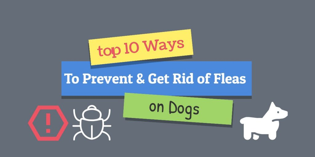 10 ways to prevent fleas on dogs