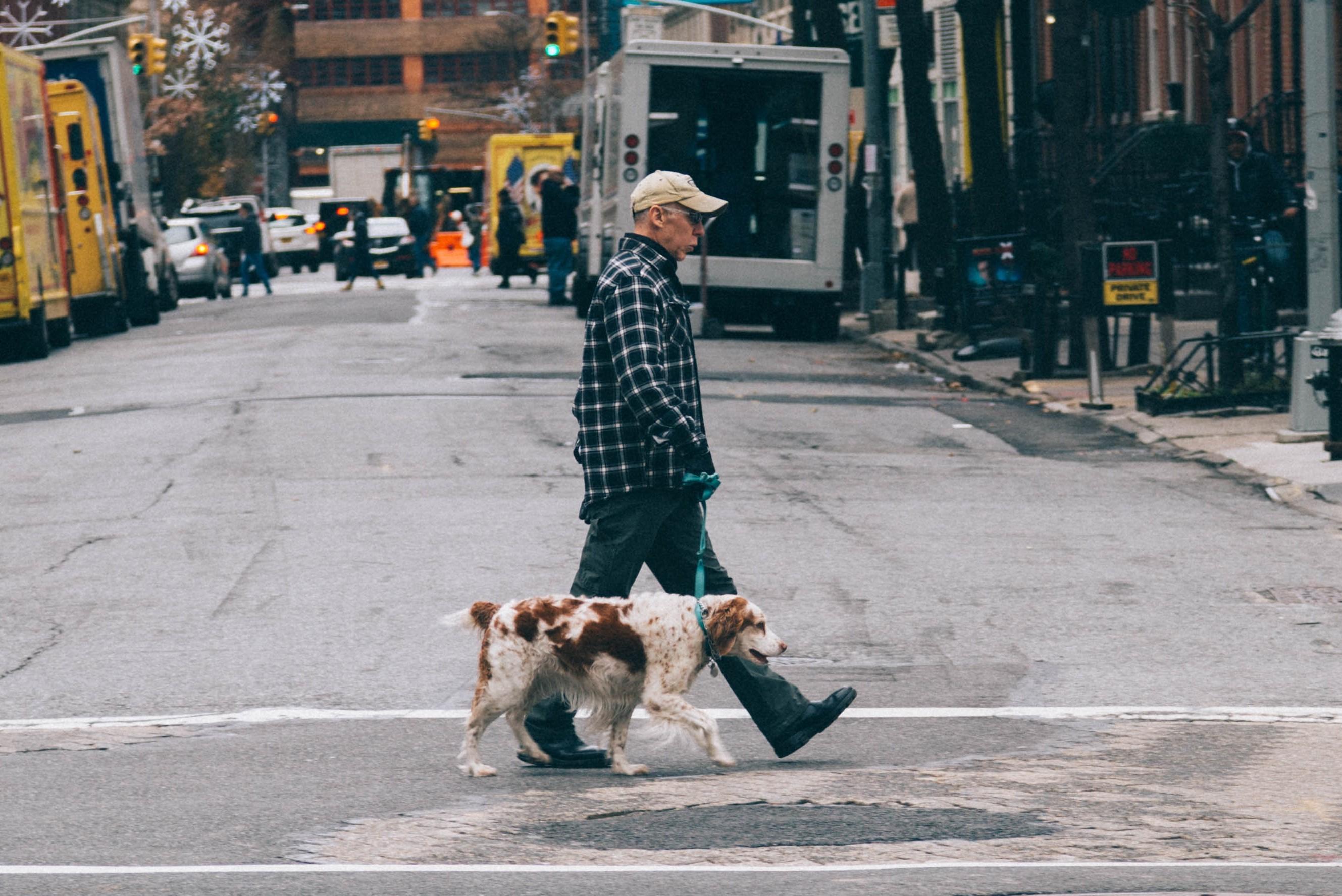 dog walking in city