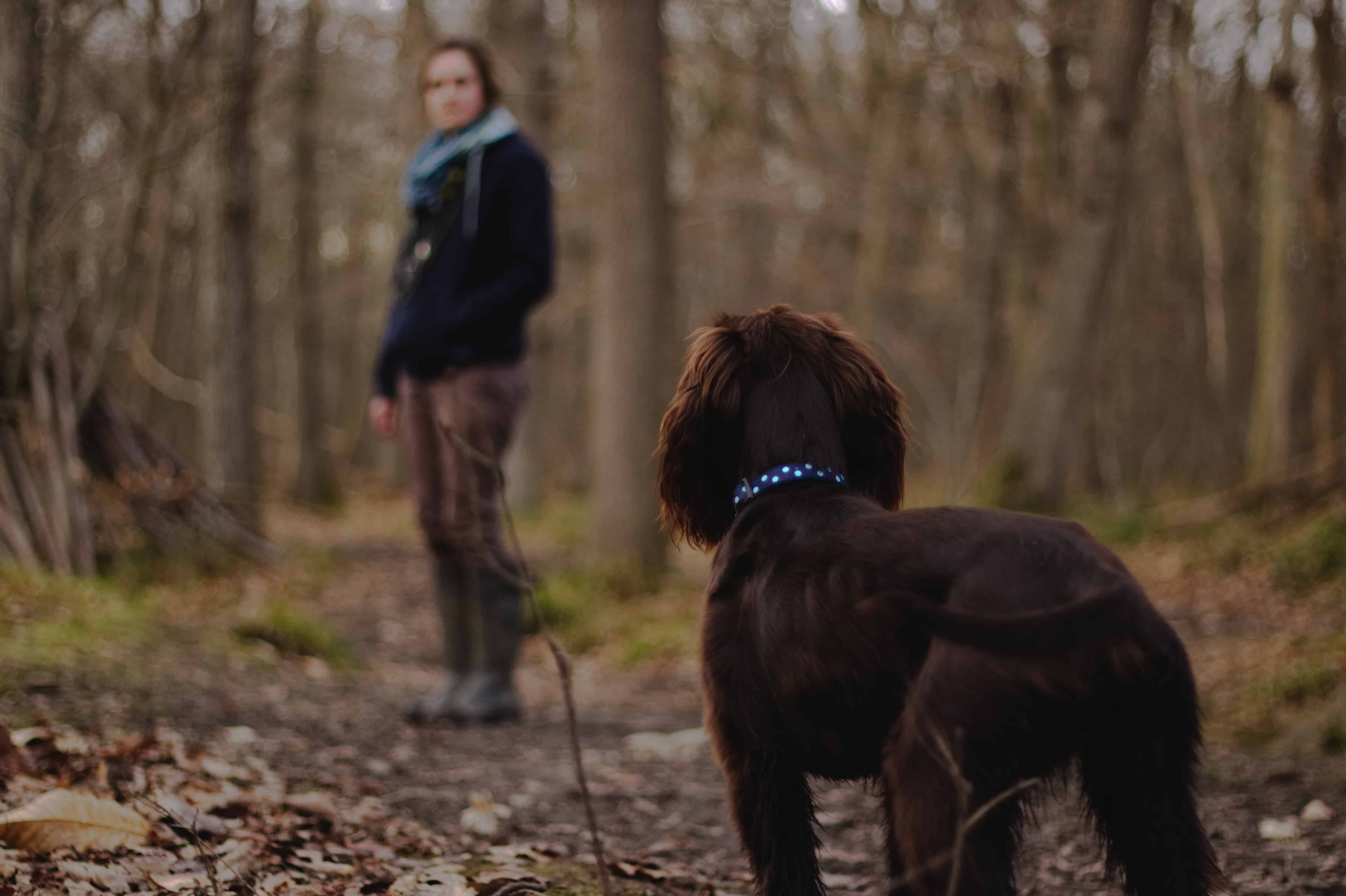 dog on forest walk