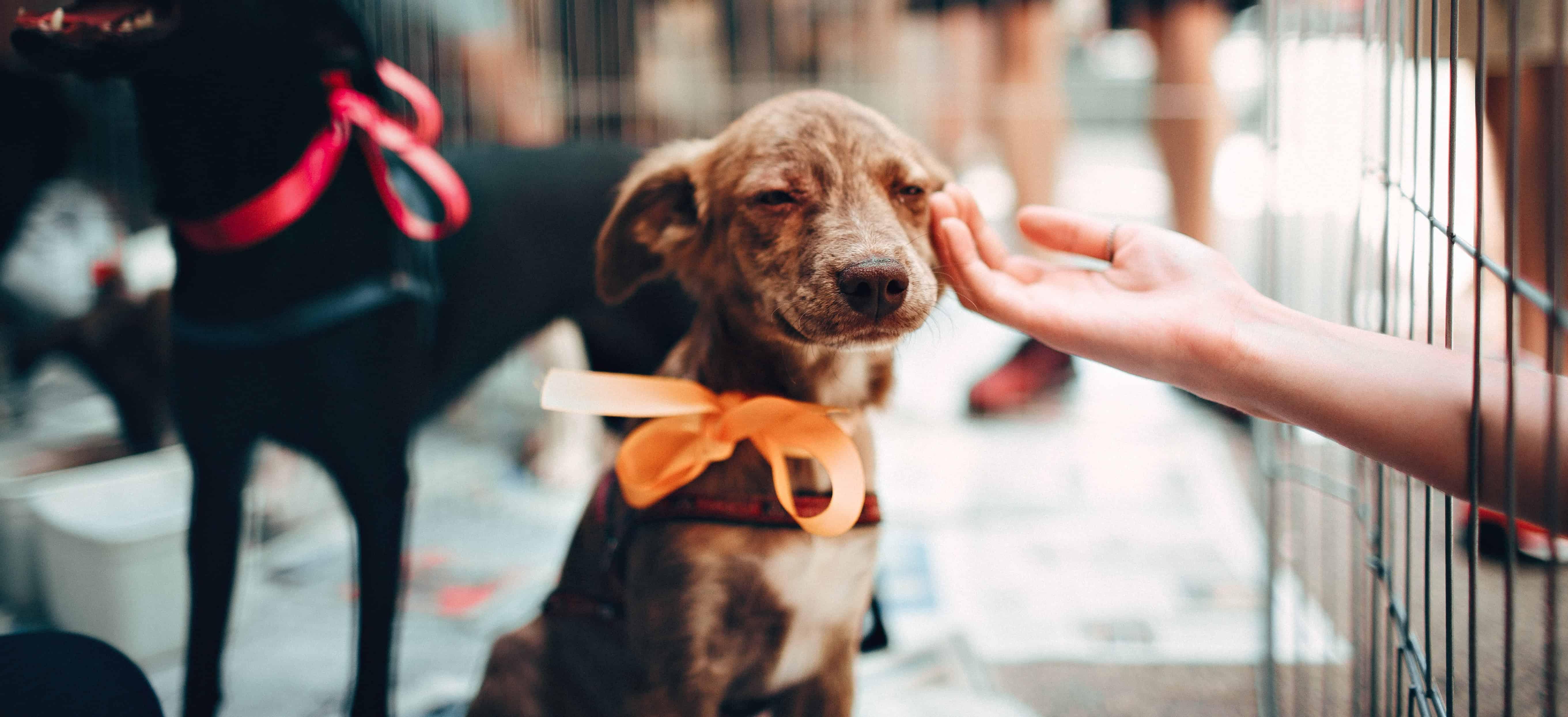 Average Cost of Adopting a Dog