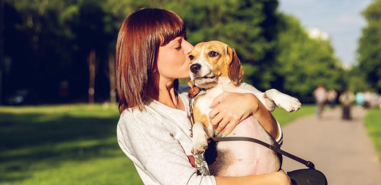 dog being hugged
