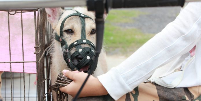 How Long Can a Dog Wear a Muzzle?