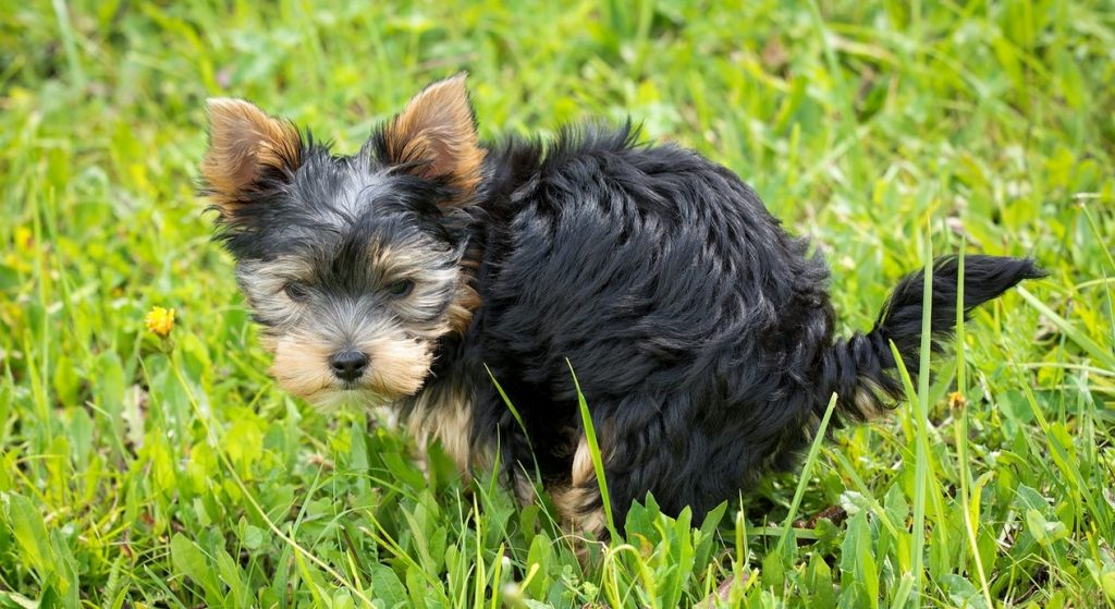 how often do dogs poop