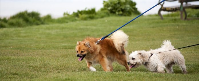 best dog leads