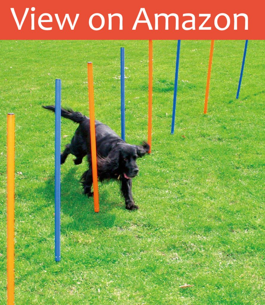 PAWISE Pet Agility Exercise Equipment