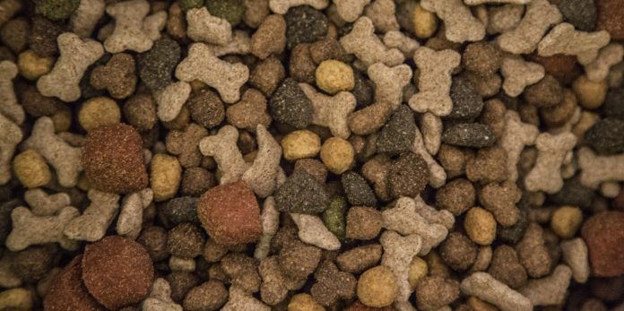 best dry dog foods
