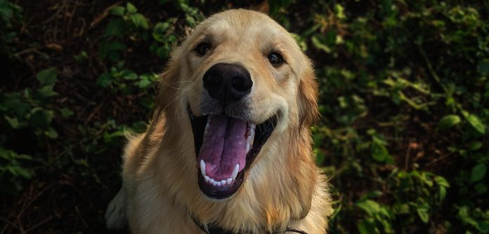 How Can I Clean My Dog's Teeth Naturally