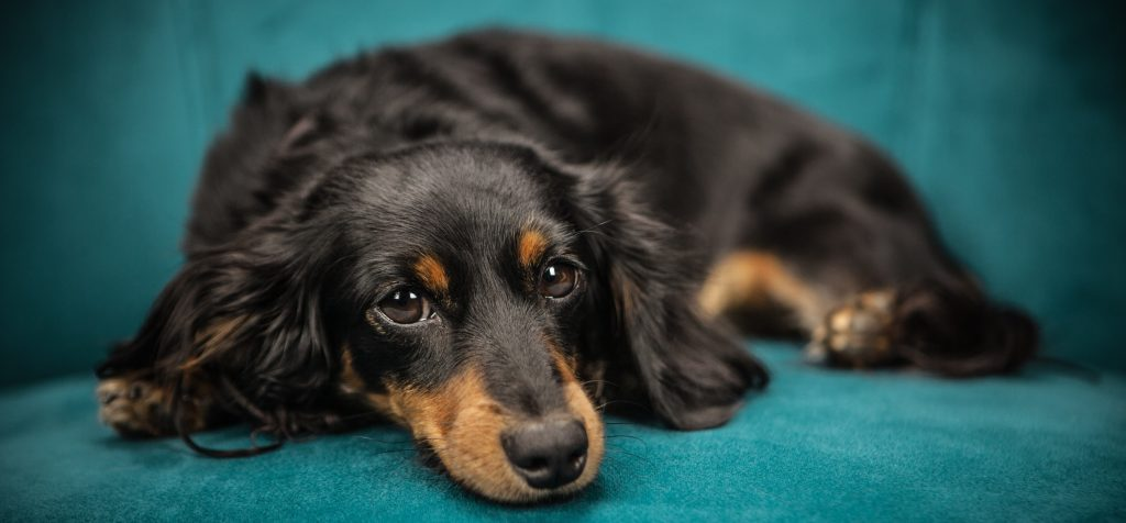 how to better understand anxious dogs