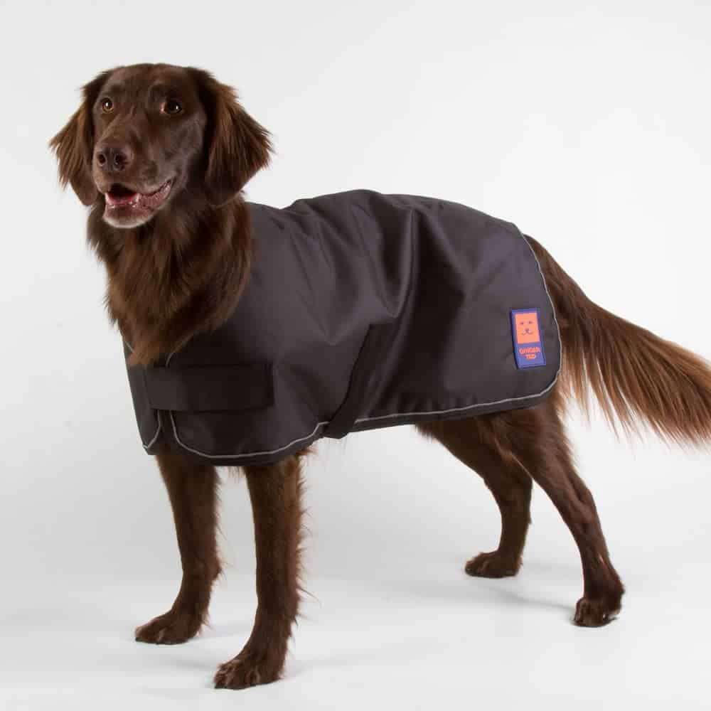 5 Best Waterproof Dog Coats for the Rain & Cold | Dog Desires