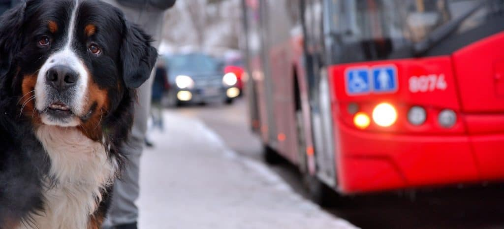 can you take dogs on buses